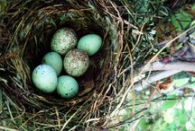 Nests and Feathers