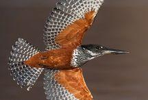 birds of Tansania / Birds of Africa