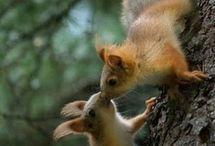 Animaux - écureuil / écureuil