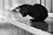 I don't like cats / by Tina