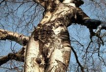 Vreemde bomen