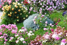 Vidiecka zahrada