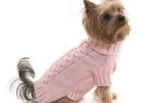 Sweters for dog