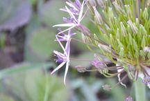 Garten - Inspiration und Ideen / Gärtnern, Gemüse und Blumen, Tricks, Pläne, Ideen