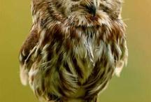 Owls / Annals art