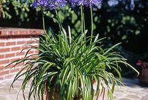 Gärtnern Kübelpflanzen
