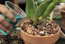 dicas para orquídeas