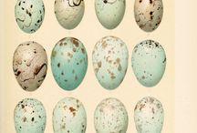 Egg illustrations
