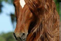 caballos salvaje