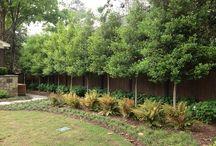 Projekt att testa för trånga utrym.uppstam träd.