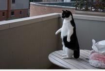 cat loverrrr
