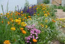 Gardening ideas / by Catherine Mosier
