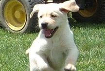 Puppy/Dog information