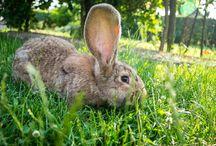 Zwierzęta / Tablica pokazująca zdjęcia zwierząt napotkanych w czasie testów sprzętu :)