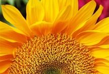 Jardines / Ideas para el jardin