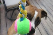 Cool dog toys
