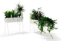 decor - flowers - plants