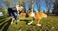 http://www.news.kliktv.gr/ouritses/item/3501-to-apithano-bokser-pou-exei-mono-dyo-podia-deite-to-video