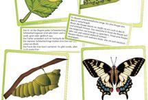 kolobeh života -motýľ