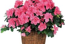 Fresh Flower Arrangements and Plants / Fresh Flower Arrangements and Plants from The Casket Store are beautiful and inexpensive.  http://www.thecasketstore.com