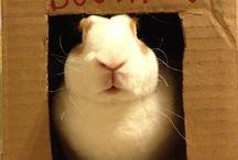 coniglietti morbidissimi / cute, soft bunnies <3