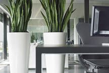 Oasis / Are you looking for plants and planters similar to this? ... .adding a touch of class to your office...