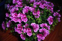 Cuidado de plantas y flores