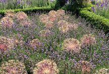 Cronin Family Garden ideas
