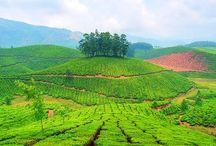 Vacance Inde Munnar