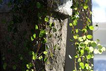 Krukväxter och odlingstips