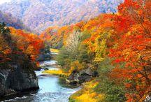 Die zehn schönsten Reiseziele im Herbst / Im Herbst bieten sich viele Reiseziele an, die in den Sommermonaten schlichtweg zu heiß wären – oder die ganzjährig mit beeindruckenden Naturschauspielen locken. Wir haben die schönsten Destinationen zusammengestellt – mit moderaten Wetteraussichten und viel Kultur.