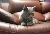 James / Gato, hijo, compañia