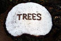 Zima a vánoce 2016