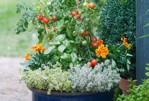 Edible and elegant container gardens