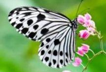 Butterfly and Flowers / by Noesje