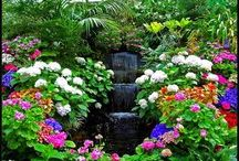 butchart gardens - flovers