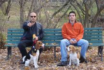 Beagles / by Lisa Tardiff