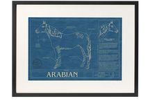 Equine Art / Horse art.