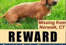 SOS - Lost and Missing Pets / Lost pets! Let's help them get home. Lost and missing pet only please.