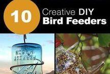 BIRD CREATIVE INFORMATION