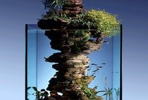Aquariums, Terrariums and Vivariums