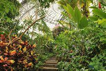 Pálmaház - trpoical greenhouse