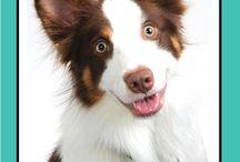 """La Vie Animale Apres La Mort et La Réincarnation Animale / Réponses à toutes les questions de votre Coeur ! sur la mort des animaux, au-delà des animaux et de la réincarnation. En outre, savoir """"comment"""" voir, sentir, communiquer et se connecter avec votre animal défunt. BRENT ATWATER Communication animale qui guérit votre Coeur! www.brentatwater.com"""