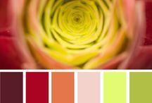 Цвет   сочетания