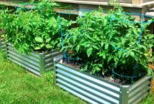 Raised Garden Beds and other above ground gardening ideas / Raised metal, wood and block beds / by Michael Enevoldsen