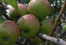 wisata petik apel mandiri