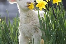 spring time / by Salena Burkard