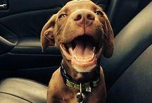 Puppy love / by Wendy Miller