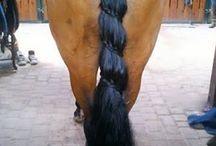 Best horse tail braids