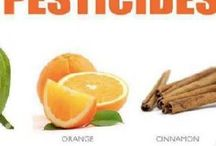 Natural Pesticides / Pesticidas Naturales que no dañan el medio ambiente, ni las mascotas ni a ti